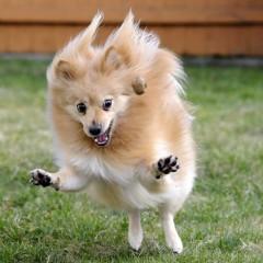 Топ 15 самых маленьких собак в мире