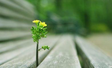 Редкое растение