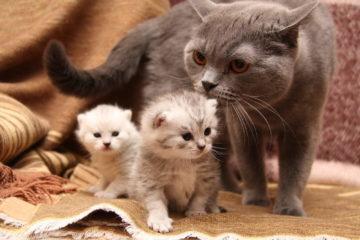 Самые добрые и ласковые породы кошек