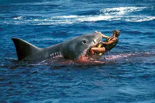 Большая белая акула (кархародон)