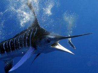 Рейтинг самых больших и страшных рыб в мире